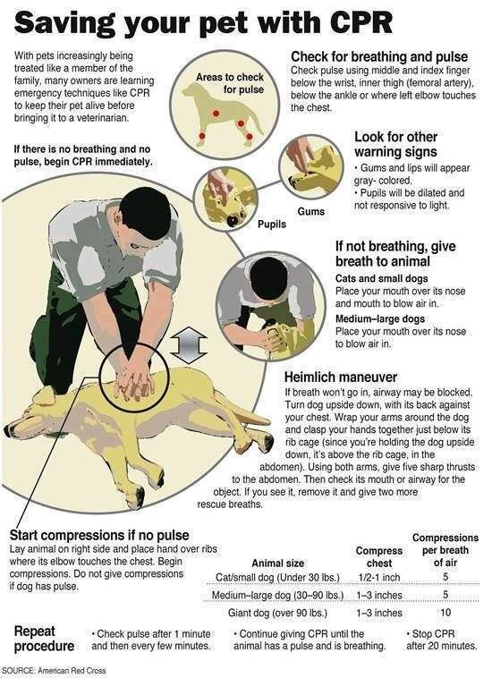 cpr dog rescue